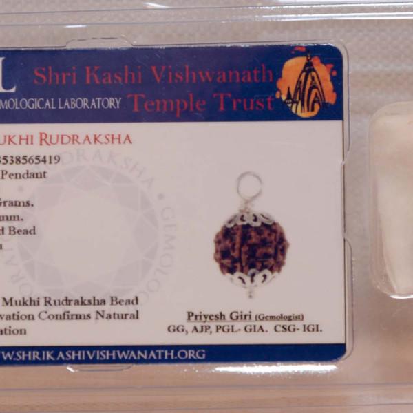 silver covered rudraksha with 7 mukhi pendant